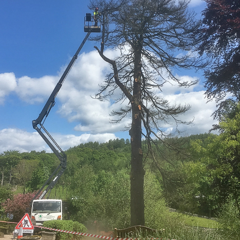 Tree Surgeons in Cumbria and Lancashire