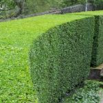 hedge shaping in cumbria